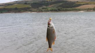 Община Монтана даде на концесия два язовира за промишлено отглеждане на риба