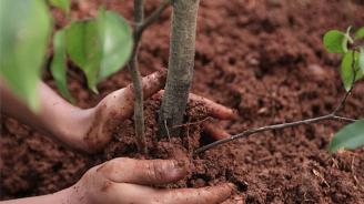 На 11 ноември Турция засади 11 млн. дръвчета