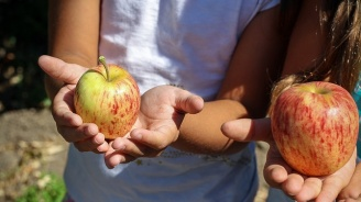 Стартира инициатива за здравословно и балансирано хранене на ученици