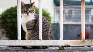 Изолираха котарак, организирал бягства от приют за животни