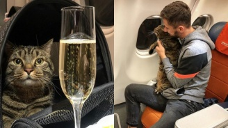 Руснак загуби самолетните си точки заради дебелия си котарак