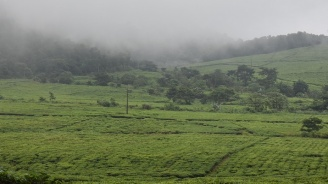 100% от земеделските и горски територии ще бъдат покрити с кадастрални карти