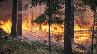 Горски пожари бушуват по източното крайбрежие на Австралия