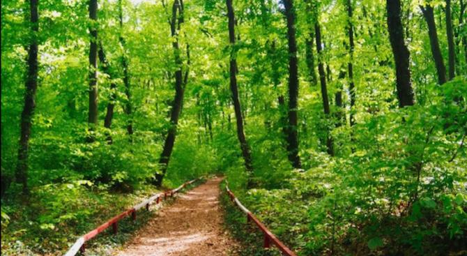 """Служители на природния парк """"Шуменско плато"""" са премахнали паднали клони"""