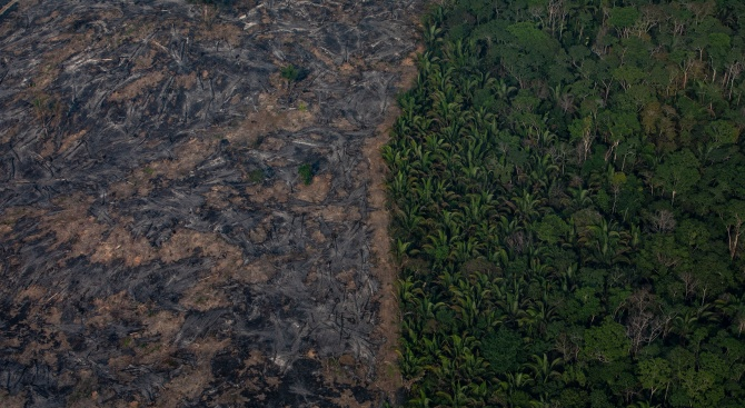 Унищожаването на т.нар. дъждовни гори в бразилска Амазония през тази
