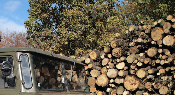 Откриха незаконна дървесина във Великотърновско
