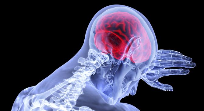 С какво се различава мозъка на новака от този на експерта
