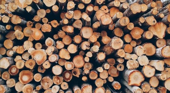Незаконно добита дървесина откриха полицаи