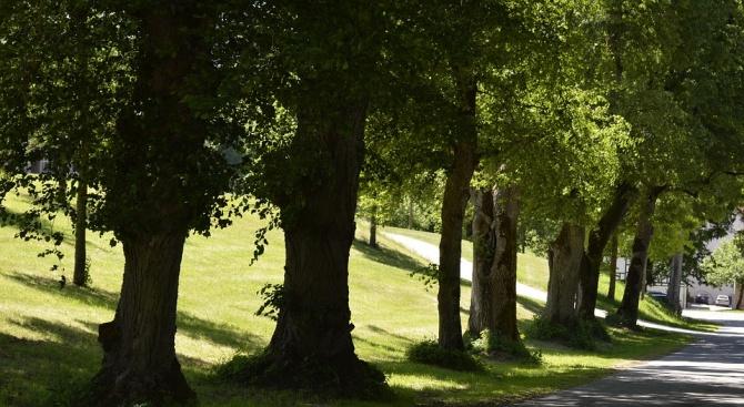 На 60 вековни и забележителни дървета, обявени за защитени на
