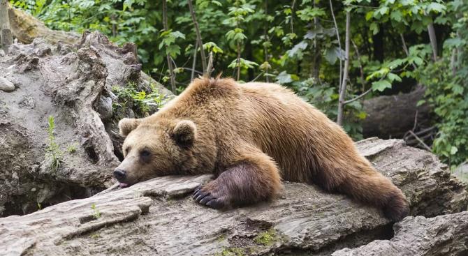 Мецаната Берна и мечокът Костадин в Центъра за защита на