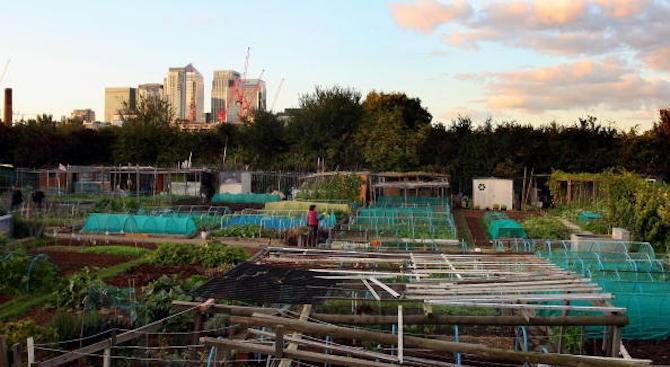 Вертикални градини, био земеделие, засадени по покривите растения – това