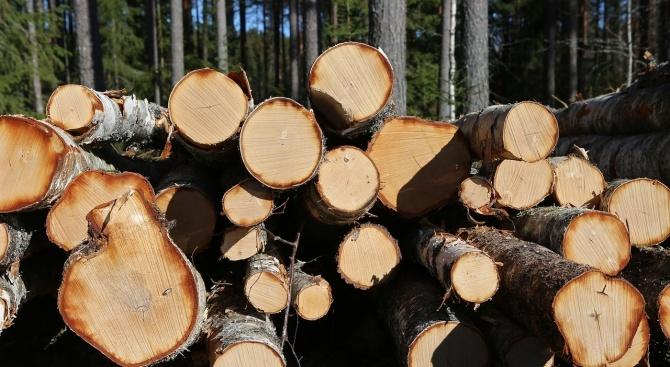 """Установени са двама бракониери, секли дървета в местността """"Кайника"""" край"""