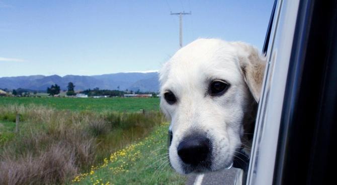 """Куче, оставено в автомобил в американския щат Флорида """"шофира"""" в"""