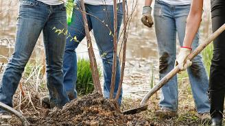 Доброволци засадиха над 1200 фиданки в Кюстендилско