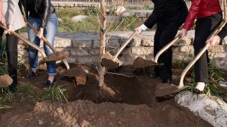За един ден засадиха над 51 хил. дървета в Сърбия