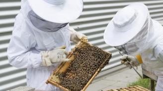 Пчеларите разчитат на директно подпомагане от Европа