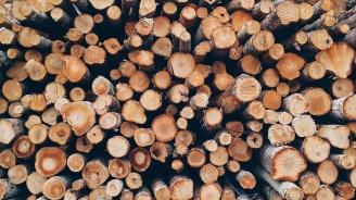 Заловиха младежи от Омуртаг с незаконни дърва