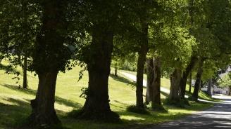 Преброиха 60 вековни дървета в Пазарджишко