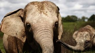 Рядък суматрански слон е открит мъртъв в Индонезия