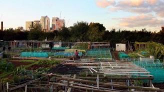 Градското земеделие се нуждае от регулация, за да се развива