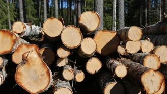 """Двама бракониери секли дървета в местността """"Кайника"""" край Омуртаг"""