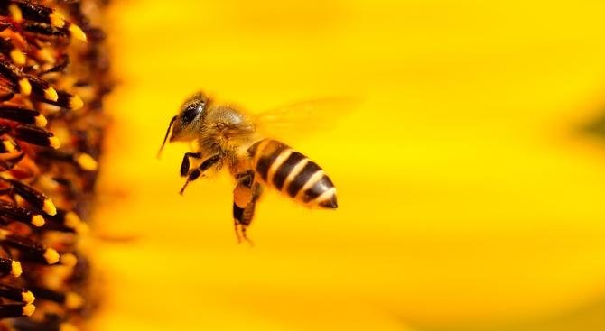 Европейска гражданска инициатива за извеждане от експлоатация на синтетичните пестициди