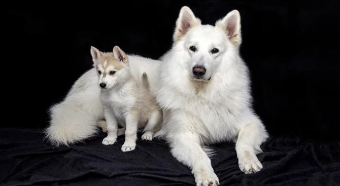 Американски учени установиха, че кученцата са на 40, преди да