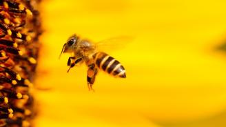 Започва общоевропейска кампания за опазване на пчелите и природата