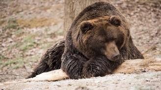 Затварят за посетители Парка за танцуващи мечки в Белица