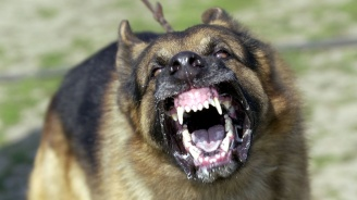 Агресивно куче разкъса домашни животни