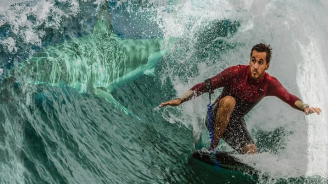7-годишно момче се сблъска с акула, докато сърфира