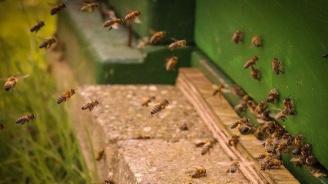 Социално слаби и трайно безработни от Видинско ще се сдобият със собствени пчелини по проект