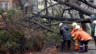Дърво падна върху кола в Пловдив