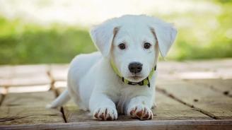 Кучетата разпознават думи, казани и от непознати