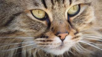 Котка уби бебе, докато спи в детската си количка