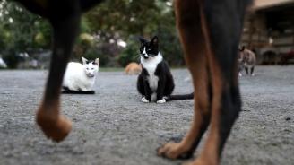 Британка направи семеен портрет на всичките си 17 кучета и котки