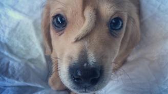 """Кученцето """"еднорог"""" ще остане в приюта си в щата Мисури"""