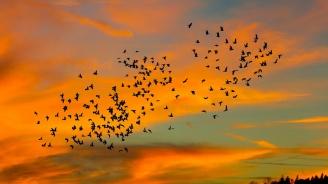 Влияят ли климатичните промени на птиците?