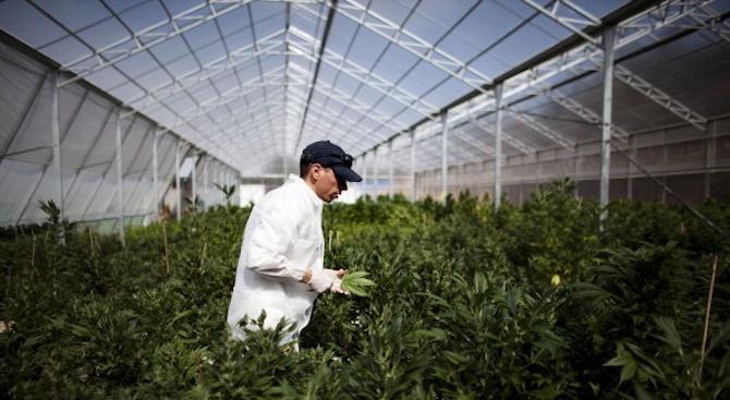 Задържа мъж за притежание на марихуана във Варна