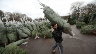 Над 26 хиляди елхи подготвя за пазара ЮЦДП в Смолян