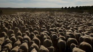 Козевъди и овцевъди получиха 22 млн. лева обвързана подкрепа за Кампания 2019