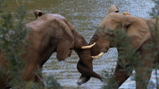 Влак уби два слона в Индия