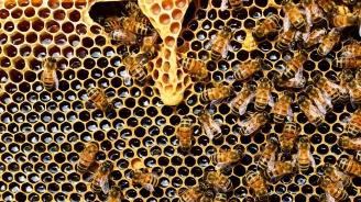 Защо тазгодишната продукция на пчеларите залежава в складовете?