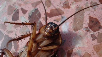 Гигантски хлебарки нападнаха Москва