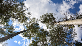 7 декара с тополи засадиха в Шуменско