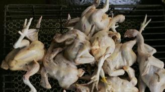 БАБХ ще взема проби от всяка пратка с птиче месо от Полша за България