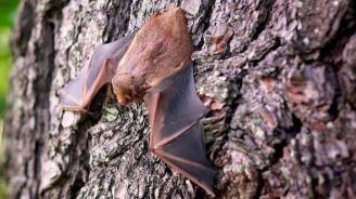 """Три вида прилепи в Кърджали ще бъдат опазвани със средства по Оперативна програма """"Околна среда"""""""