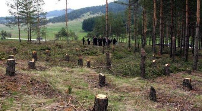 МЗХГ обещава: Ще съберем щетата за бюджета от 80 млн.лв. от заменките на гори