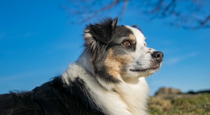 Американка нае малък самолет, за да търси откраднатото си куче