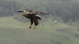Звездите: Орелът е символ на днешния ден